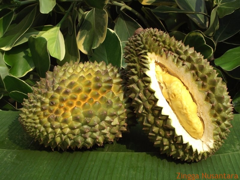 Durian Lhong adalah Salah Satu Makanan yang Mudah dikenali dari aromanya