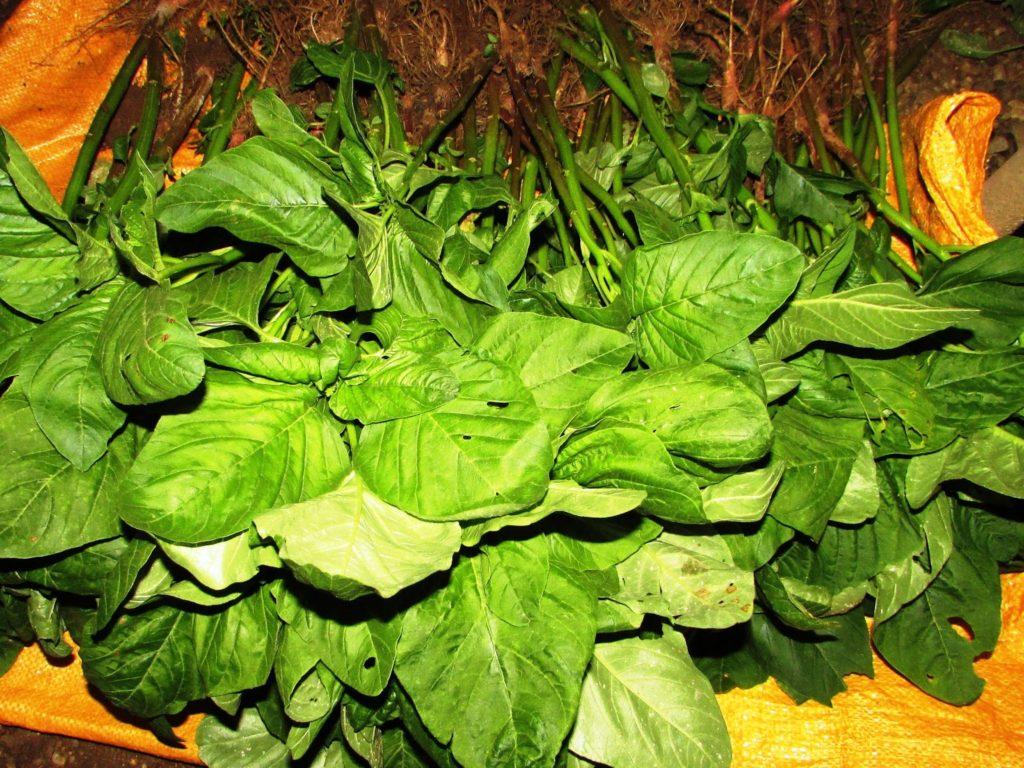 Cara pintar diet sehat dengan sayuran dengan daun bayam