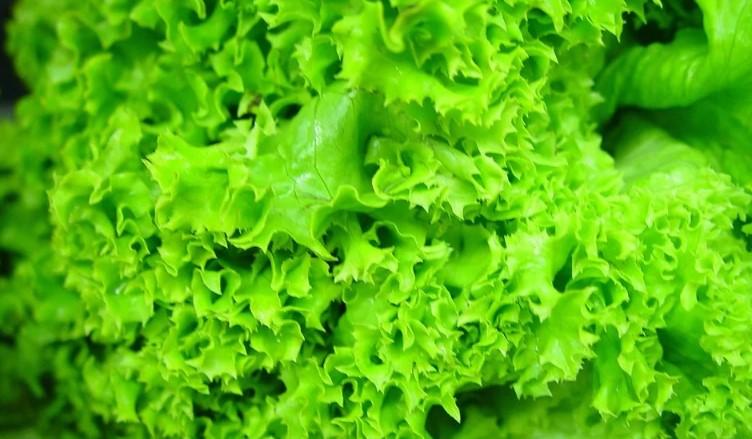 Cara pintar diet sehat dengan sayuran dengan selada